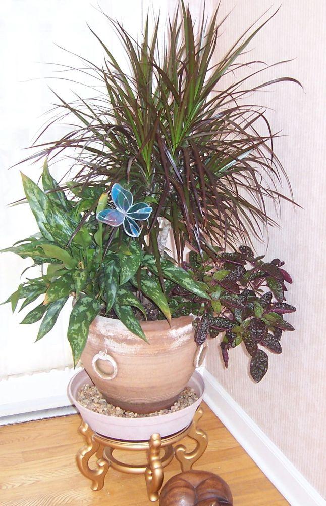 Indoor Plants (2/2)