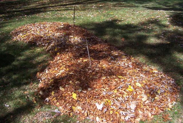 Creating a New Garden Bed (5/5)