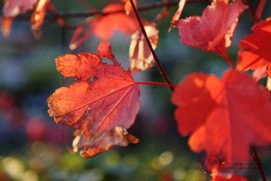 Autumn colour 2014
