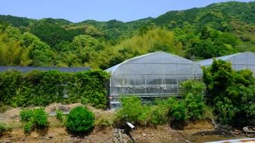 Kochi Japan Botaincal Gardens Tomitaro Makino travel (110)