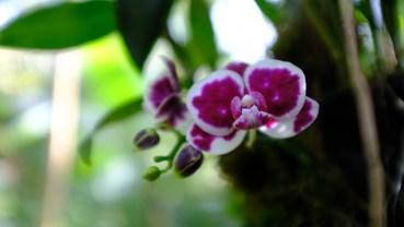Kochi Japan Botaincal Gardens Tomitaro Makino travel (427)