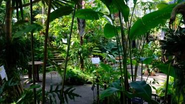 Kochi Japan Botaincal Gardens Tomitaro Makino travel (467)