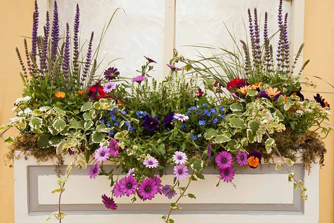 Window Box with Flowers | GardenersPath.com