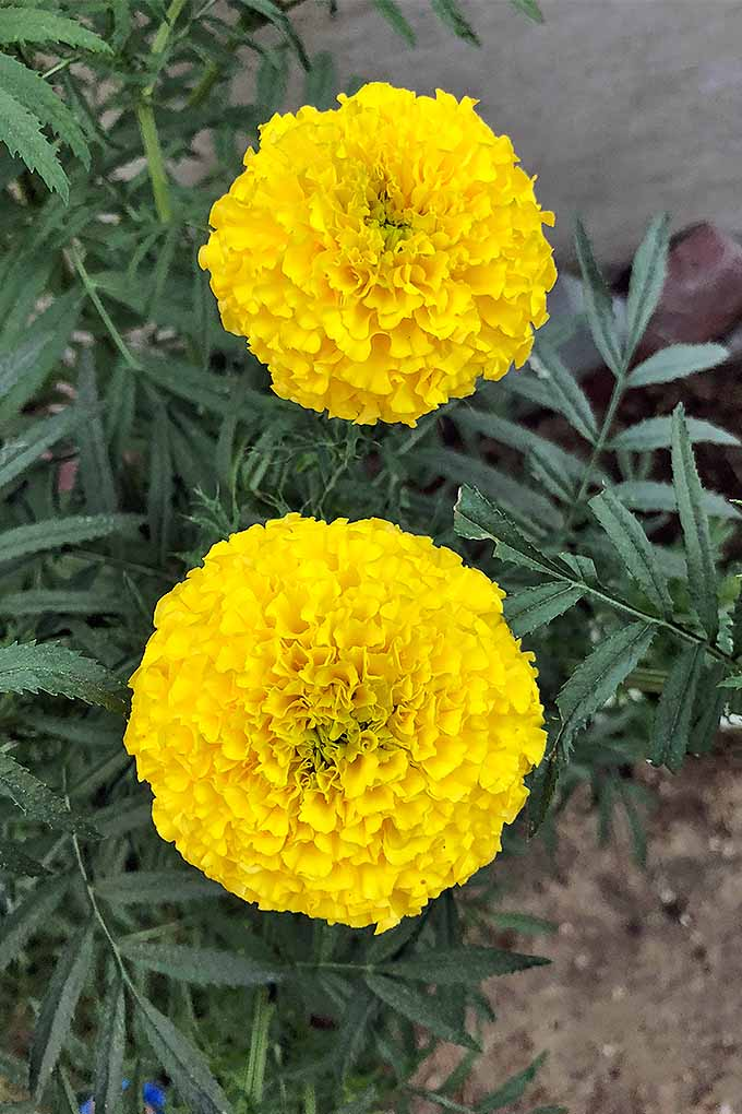 Should I Mulch My Flower Garden