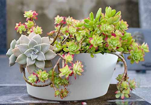 9 Best Succulent Planters For Container Gardening 2019