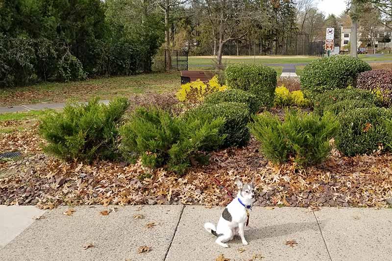 Low Growing Shrubs Walkway