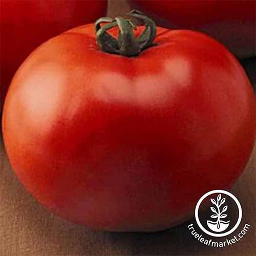 A close up of a red 'Goliath' tomato, the red fruit filling the frame on a wooden surface. At the bottom right of the frame is a circular logo with white text.