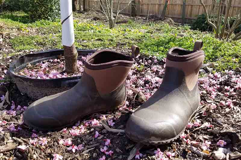 A close up of a pair of brown gardening boots pictured in bright sunshine in the garden with fallen leaves and a lawn in the background.