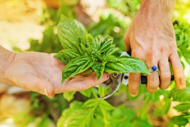 Garden Healthy