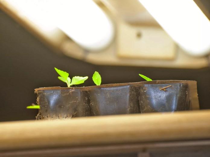Light for Seedlings