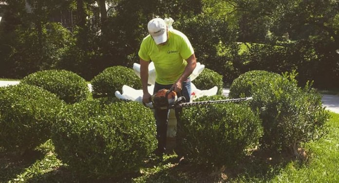 Hedge trimming for your Garden