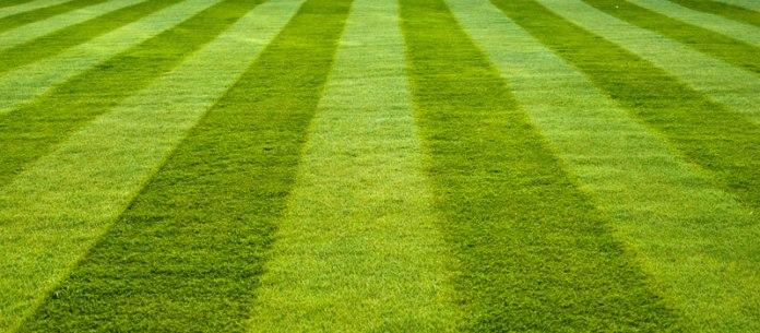 Organic Lawns Success