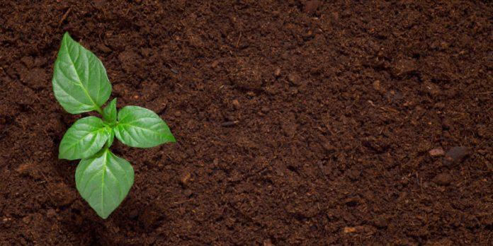 Secrets of Good Soil