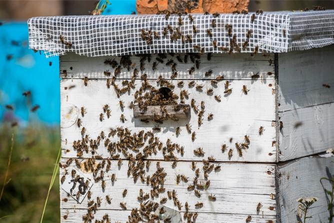 Bee Garden Hive