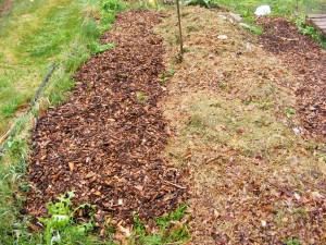 Mulch Path beside the garden bed