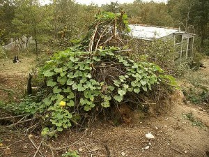 compost heap with pumpkin growing by hardworkinghippy