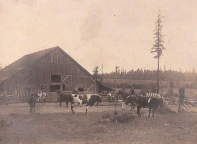 Shattuck Dairy - cows, 4 men, 2 boys, tall tree