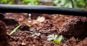How to Install a Drip Irrigation System