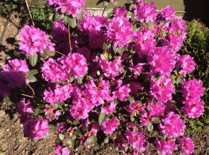 garden website 5
