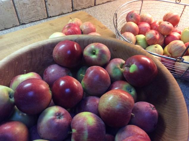 garden-2016-apples