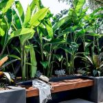 30 Amazing and Beautiful Tropical Garden Ideas (11)