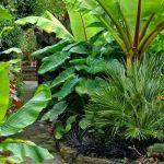 30 Amazing and Beautiful Tropical Garden Ideas (2)