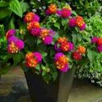 40 Beautiful Container Flower Garden Ideas (4)