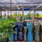 Top Plant Nursery Business Ideas