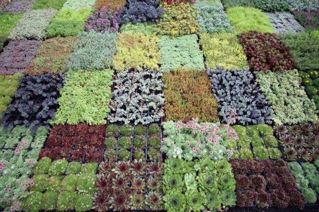 Awesome plant nursery business ideas