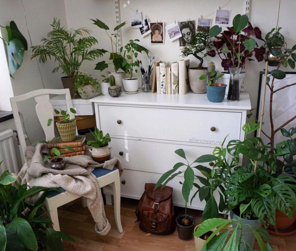 Best Plant Aesthetic Bedroom