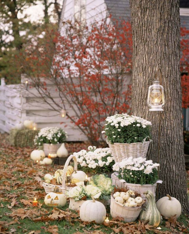 Beautiful pumpkin decorations for fall