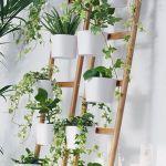 Amazing Indoor Plant Wall Ideas