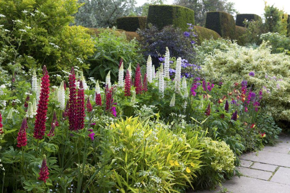 Awesome  garden border planting ideas
