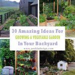 Beautiful Backyard Garden Layouts