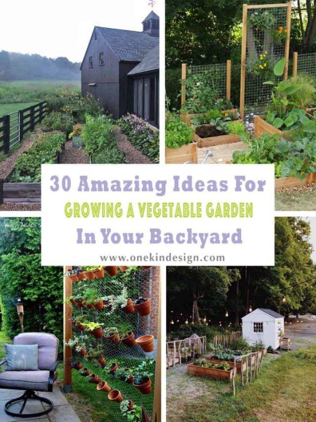 Adorable backyard garden layouts