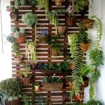 Beautiful Balcony Plant Ideas
