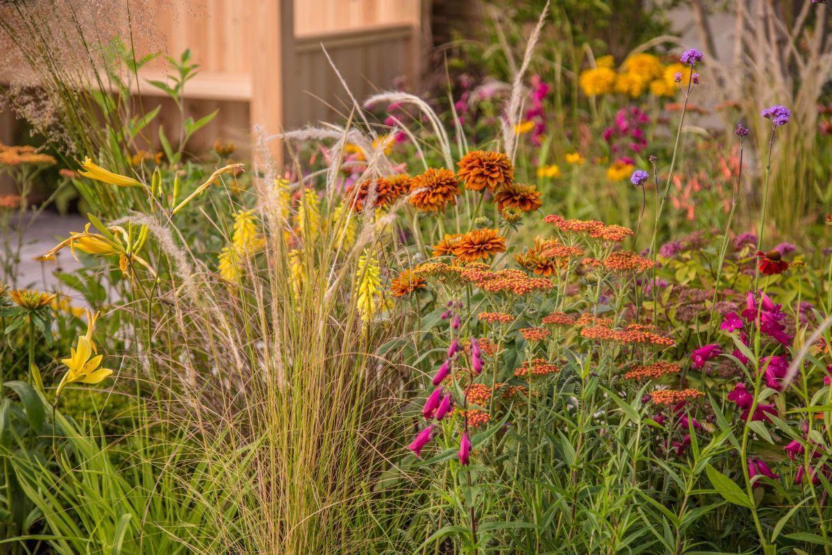 Nice  garden border planting ideas