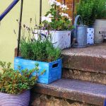 Best Outdoor Plants In Pots Ideas