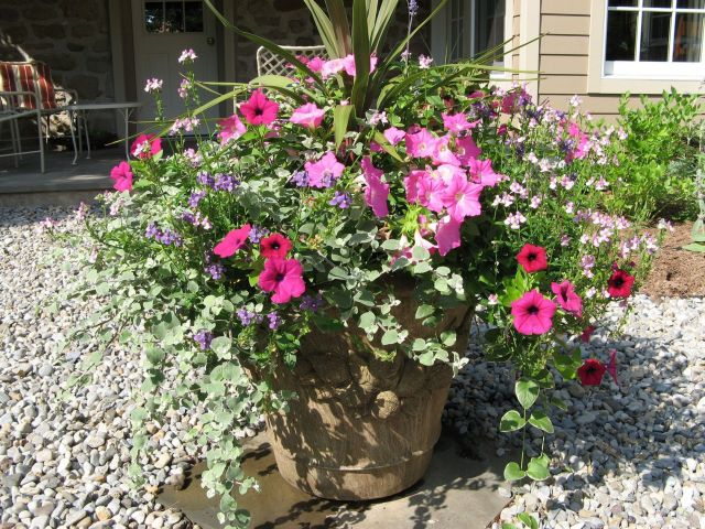 Nice container plants for full sun ideas