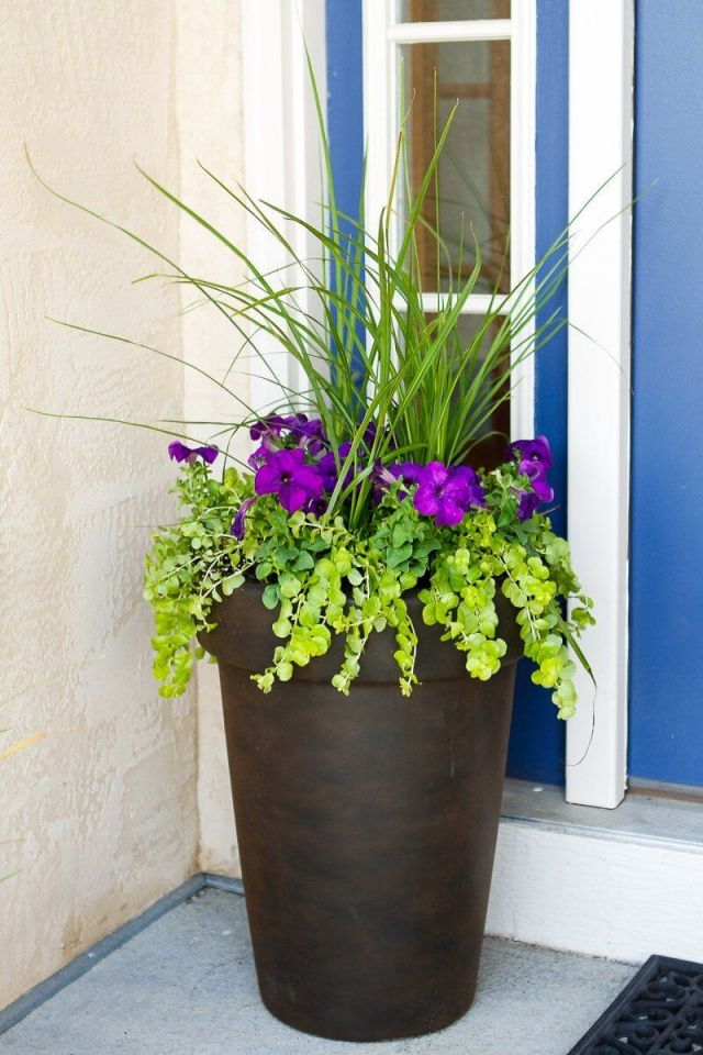 Gorgeous outdoor plants in pots ideas