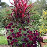 Cool Outdoor Plants In Pots Ideas