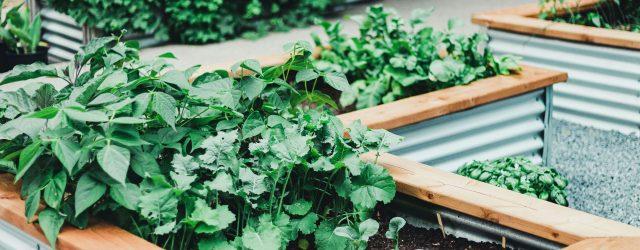 Adorable inexpensive raised garden bed ideas