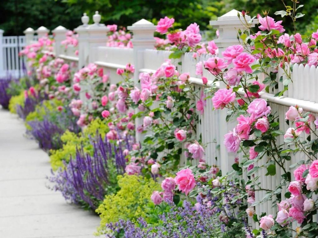 Adorable  front yard landscaping ideas roses