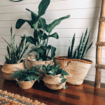 Awesome Indoor Plant Pot Decoration Ideas
