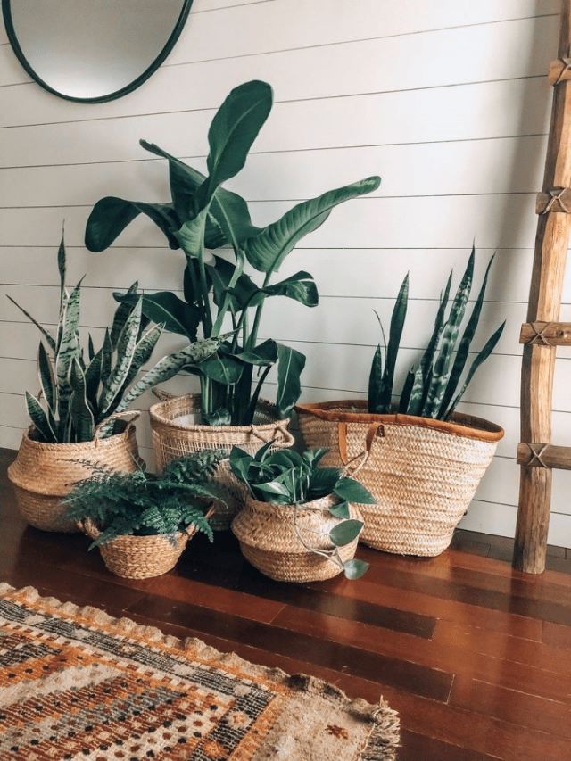 Top indoor plant pot decoration ideas