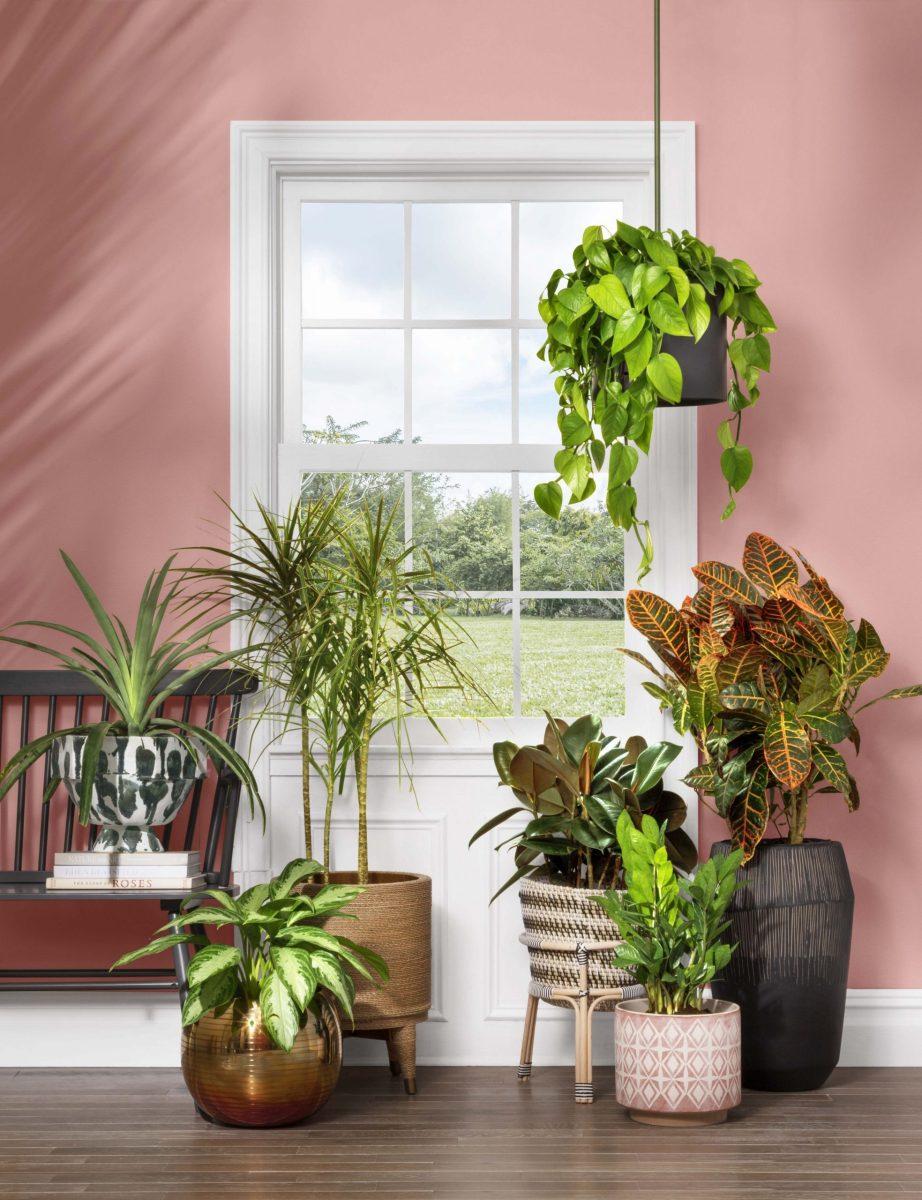 Adorable  indoor potted plant arrangement ideas