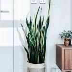 Gorgeous Indoor Potted Plant Arrangement Ideas