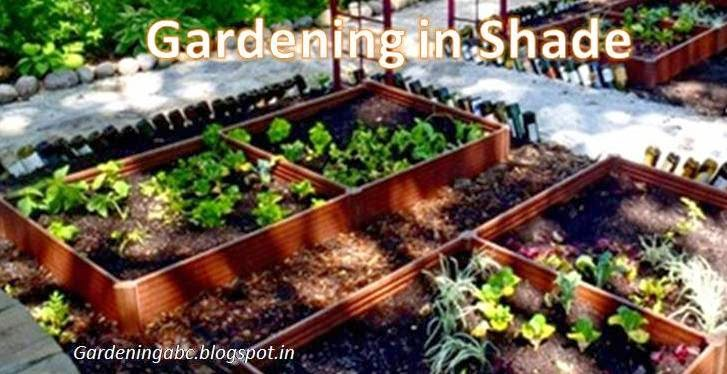 Gardening In Shade: Some Useful Information