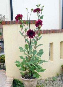 gardening-genkan (6)