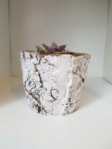 Birch Planter for Succulents